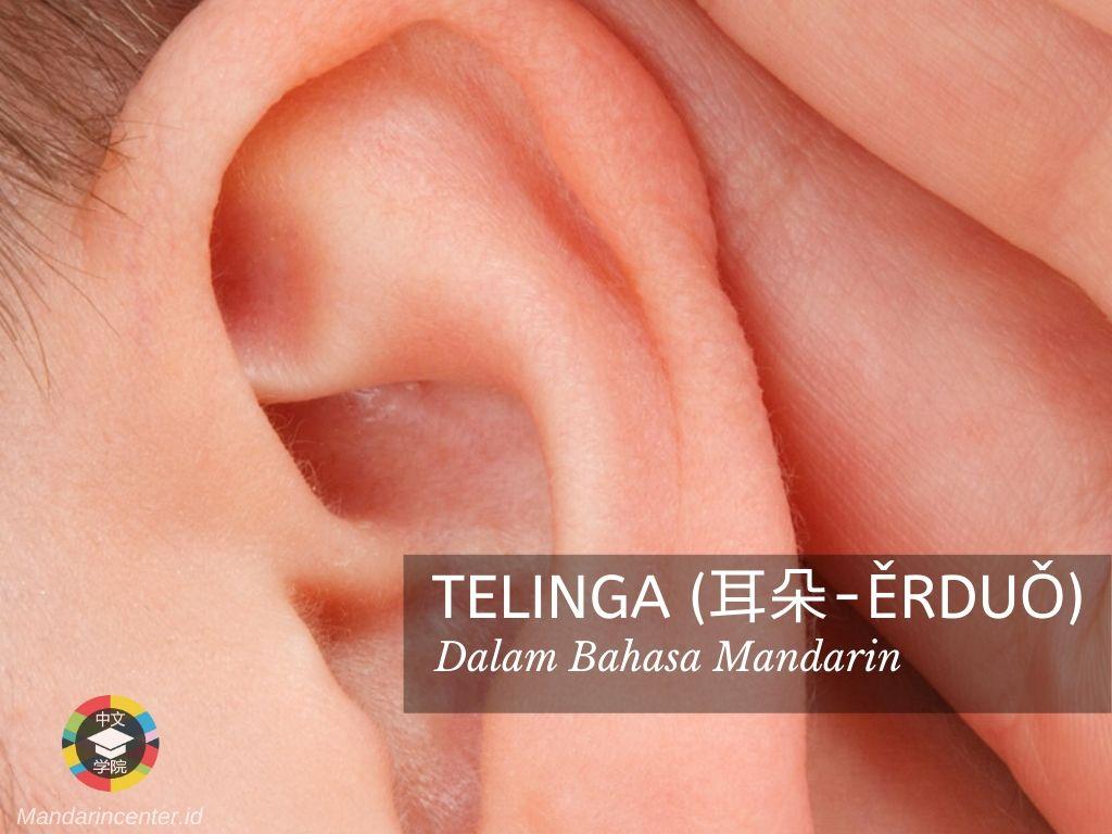Telinga Dalam Bahasa Mandarin - Anggota Tubuh Dalam Bahasa Mandarin